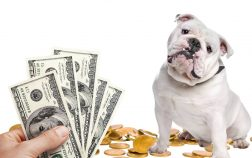 What Is The Average Cost Of English Bulldog And Why