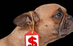 Average Price For French Bulldog Frenchie Prices Explained!