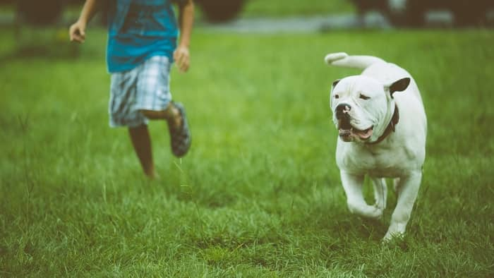 Bulldog is a loyal breed with a strong and dominant personality